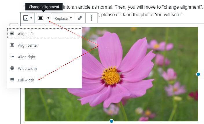 full width blocks wordpress