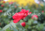 faq schema markup plugin